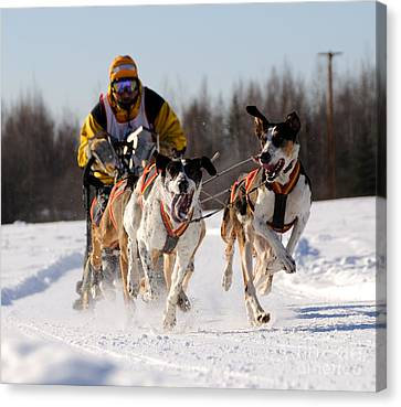 2011 Limited North American Sled Dog Race Canvas Print by Gary Whitton