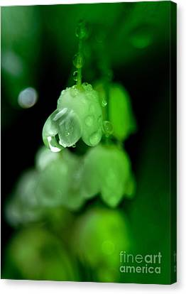 Flower And Drops Canvas Print by Odon Czintos