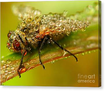 Fly Canvas Print by Odon Czintos