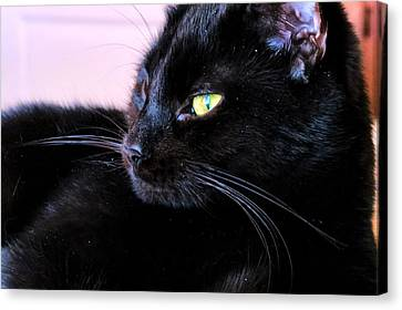 Green Eyes Canvas Print by Michelle Milano