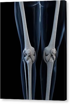 Knee Anatomy, Artwork Canvas Print by Sciepro
