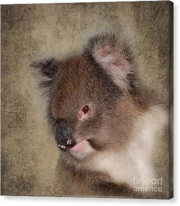 Koala Canvas Print by Louise Heusinkveld