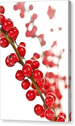 Red Christmas Berries Canvas Print by Elena Elisseeva