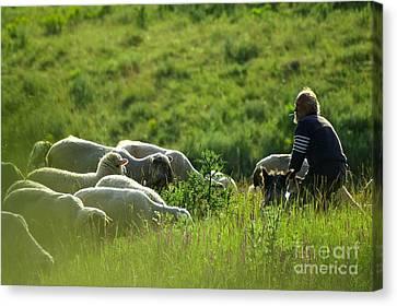 Shepherd Canvas Print by Odon Czintos