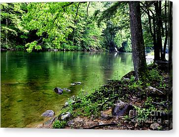 Spring Along Cranberry River Canvas Print by Thomas R Fletcher