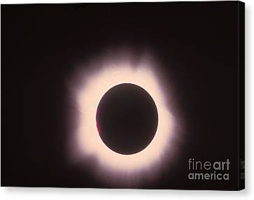 Total Solar Eclipse With Corona Canvas Print by Science Source