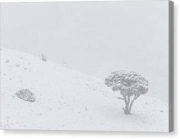 Yellowstone Park Wyoming Winter Snow Canvas Print by Mark Duffy