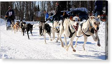 2011 Open North American Sled Dog Race Canvas Print by Gary Whitton