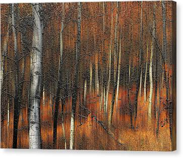 2385 Canvas Print by Peter Holme III