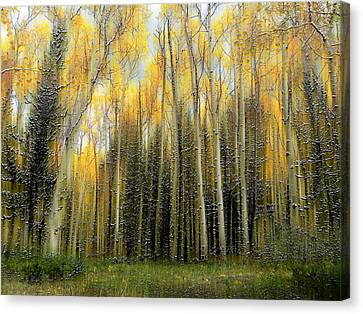 2399 Canvas Print by Peter Holme III