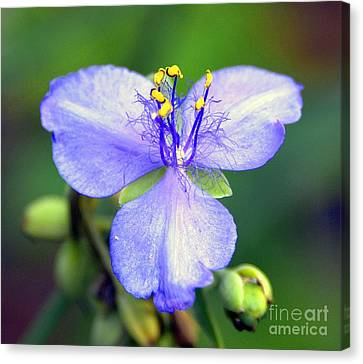 Flowers Of The Forest Series  Canvas Print by Terry Troupe