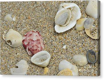 Ocean Tides Series Canvas Print by Terry Troupe
