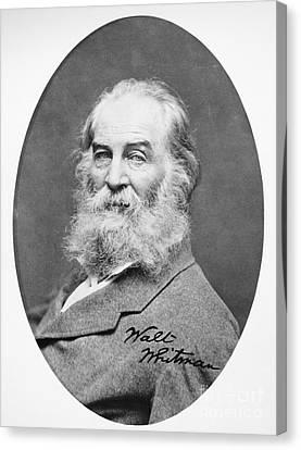 Walt Whitman (1819-1892) Canvas Print by Granger