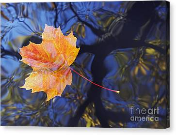 Autumn Leaf On The Water Canvas Print by Michal Boubin