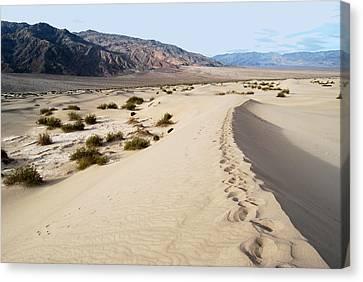 Death Valley National Park Mesquite Flat Sand Dunes Canvas Print by Eva Kaufman