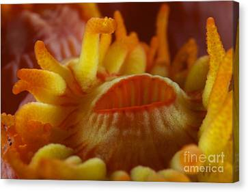 Detailed View Of Yellow Tube Coral Canvas Print by Terry Moore