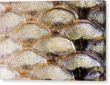 Fish Scales Background Canvas Print by Odon Czintos