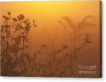 Meadow Flowers Canvas Print by Odon Czintos
