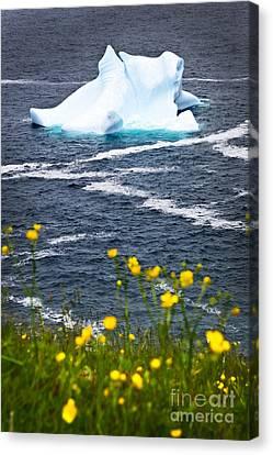 Melting Iceberg Canvas Print by Elena Elisseeva