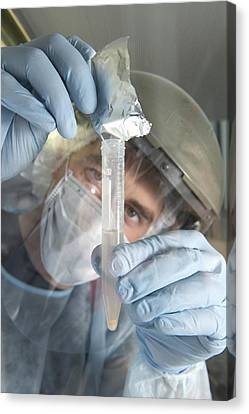 Neanderthal Dna Extraction Canvas Print by Volker Steger