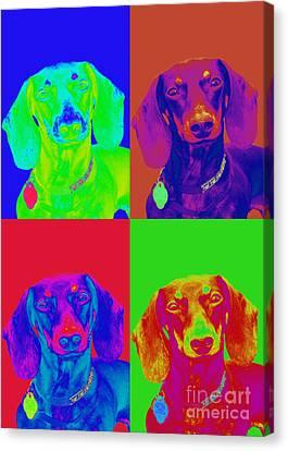 Pop Art Dachshund Canvas Print by Renae Laughner