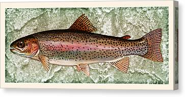 Rainbow Trout Canvas Print by John Stephens