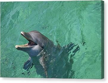 Roatan, Bay Islands, Honduras Canvas Print by Stuart Westmorland