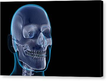 The Bones Of The Head And Face Canvas Print by MedicalRF.com