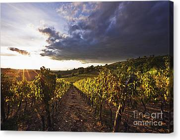 Vineyards Canvas Print by Jeremy Woodhouse