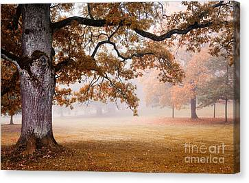 Autumn Canvas Print by Kati Molin