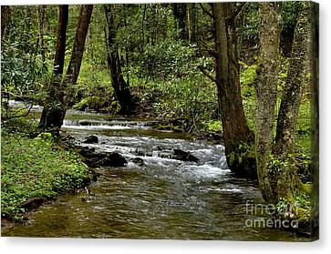Craig Run Monongahela National Forest Canvas Print by Thomas R Fletcher
