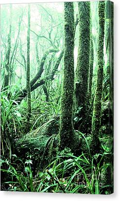 El Yunque National Forest Canvas Print by Thomas R Fletcher