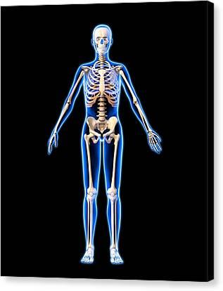 Female Skeleton, Artwork Canvas Print by Roger Harris