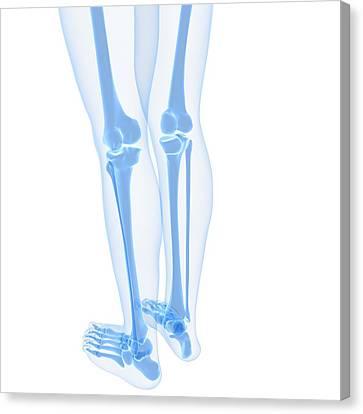 Leg Bones, Artwork Canvas Print by Sciepro