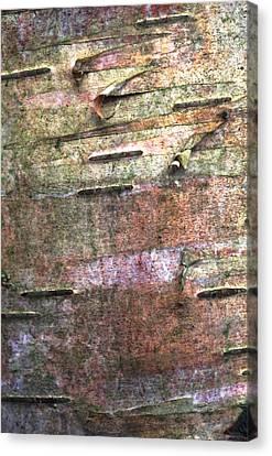 Tree Bark Canvas Print by John Foxx