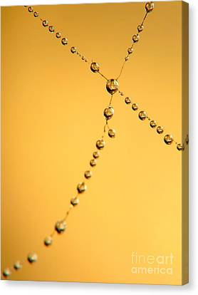 Drops Canvas Print by Odon Czintos