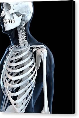 Upper Body Bones, Artwork Canvas Print by Sciepro