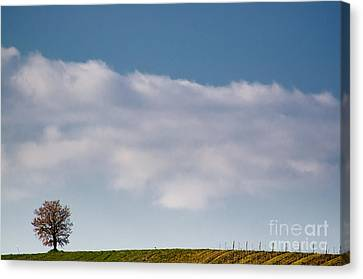 Lonely Tree Canvas Print by Mats Silvan