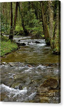 Monongahela National Forest Canvas Print by Thomas R Fletcher