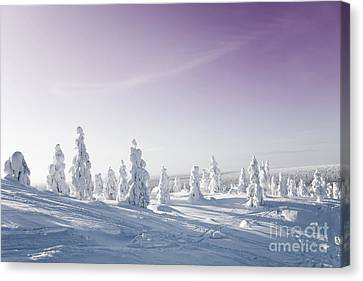Winter Canvas Print by Kati Molin