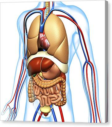Human Anatomy, Artwork Canvas Print by Pasieka
