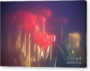 71-19 Tulips Canvas Print by Renata Ratajczyk