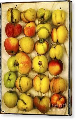 Apples Canvas Print by Bernard Jaubert