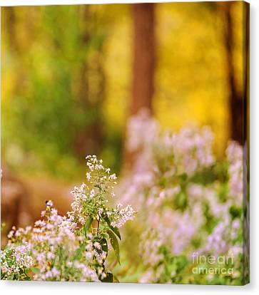 Autumn Series Canvas Print by HD Connelly