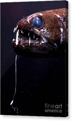 Dragonfish Canvas Print by Dante Fenolio