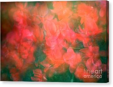 90-1 Pink And Red Flowers Canvas Print by Renata Ratajczyk