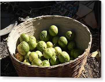 A Basket Full Of Guavas Just Outside Bhopal Canvas Print by Ashish Agarwal