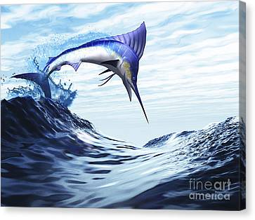 A Beautiful Blue Marlin Bursts Canvas Print by Corey Ford