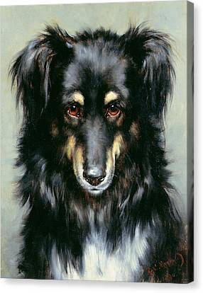 A Black And Tan Collie Canvas Print by Robert Morley