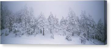 A Blizzard On Spruce Mountain Canvas Print by Rich Reid